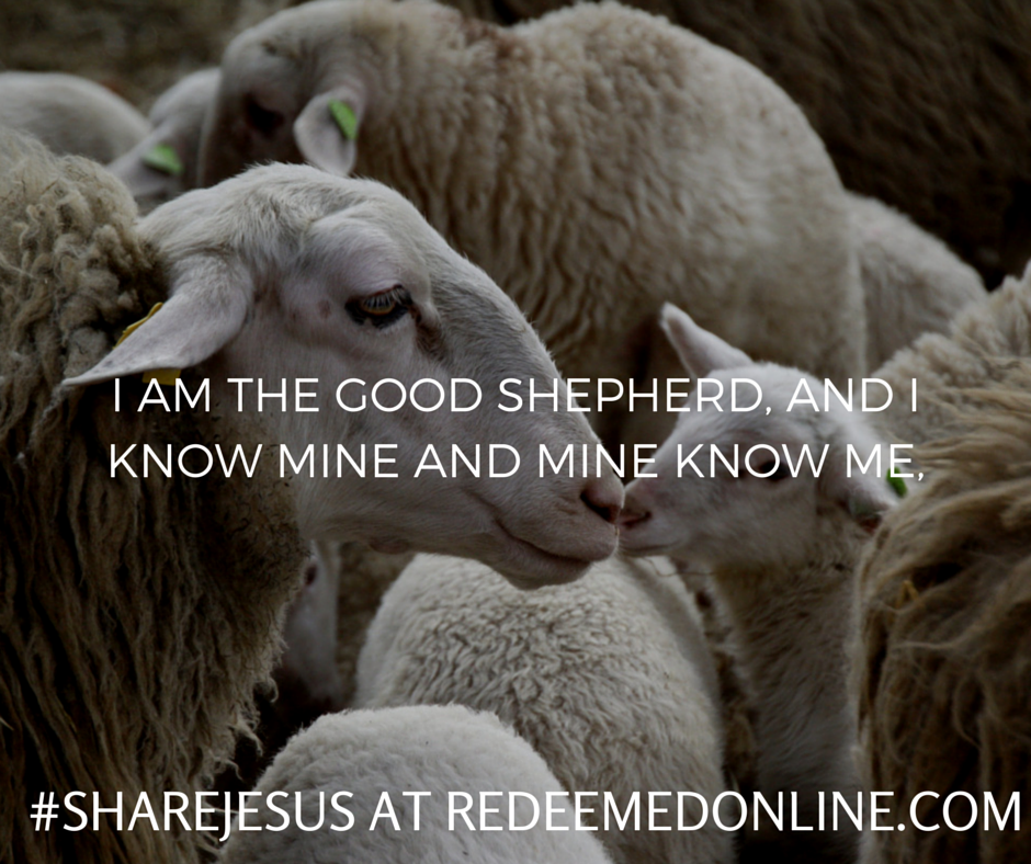 good shepherd kelly pease lombardi blog