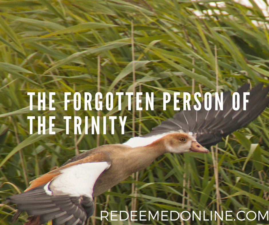 The Forgotten Person of the Trinity